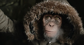 WPOTA_Bad_Ape_with_hoodie